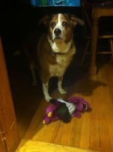 Barney & Shilo